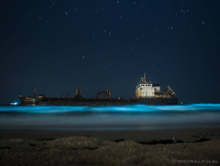 Bioluminescence – to gloat or to worry?